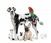 image of spotted dog  - Group of pets standing in front of white background studio shot - JPG