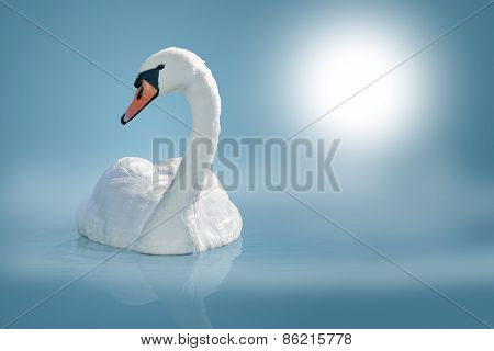 Swan On Calm Water Surface