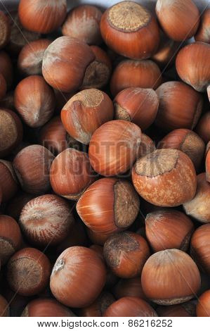 Many Hazeknuts Close Up