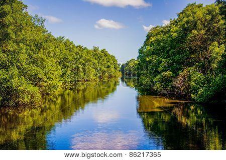 Downstream River