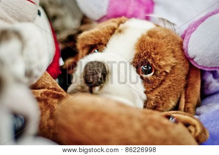 Toy Dog With Big Eyes.