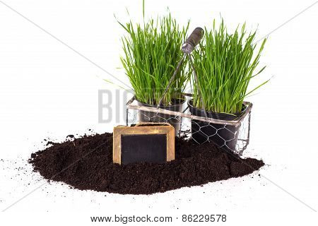 Grass In Pots, Ground  And Blackboard