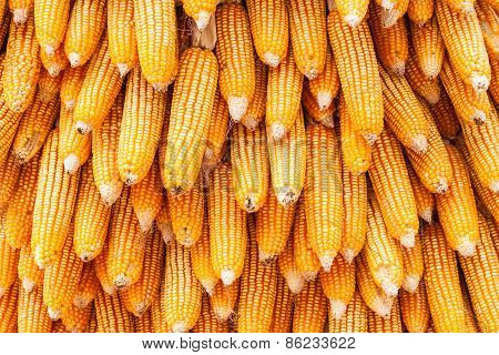 Corns For Animal Feeding