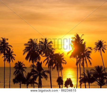 Coconut Horizon Burning Skies