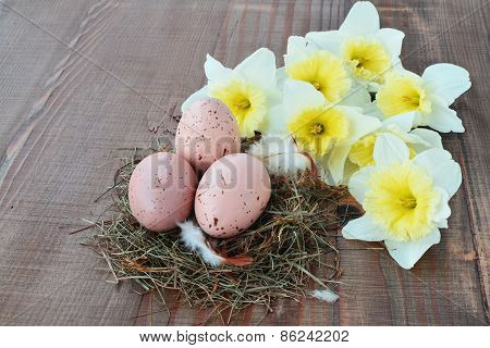 Spotted Eggs In Nest With Daffodils