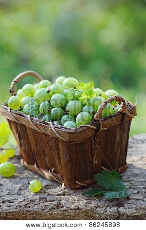Fresh Green Gooseberries In A Wooden Basket Outdoor