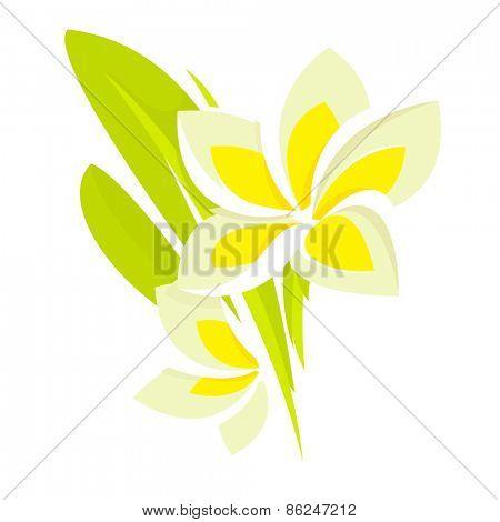 Frangipani Plumeria tropical flower