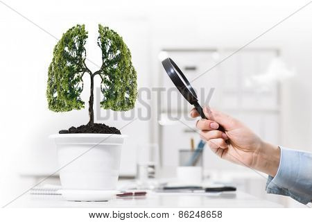 Close up of human hand examining tree in pot with magnifier