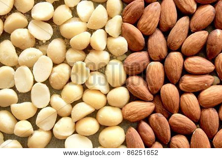 Macro Almonds and Macadamia Nuts 3