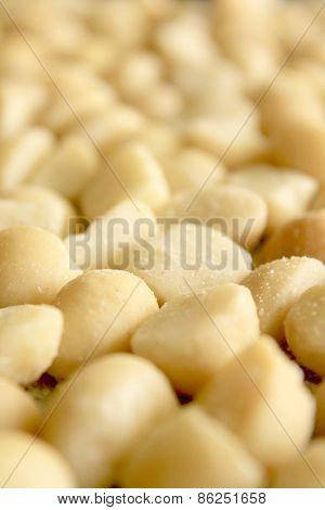 Macro Macadamia Nuts 3