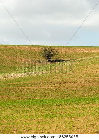 One Tree Growing In A Field