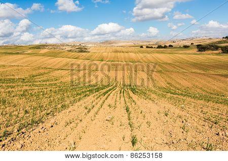 The Rural Farmland Scenery