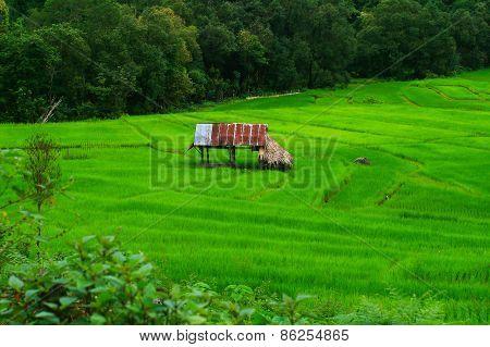 Thailand Farm in Mae hong son