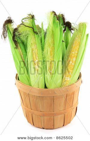 Ears Of Corn In A Bushel.