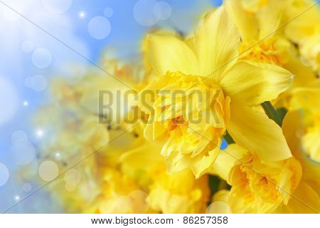 Spring Floral Border With Narcissus Flowers