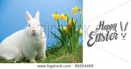 Happy easter against white fluffy bunny sitting beside daffodils with easter eggs
