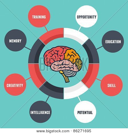 Vector Infographics Of Abilities And Qualities Of The Human Brain