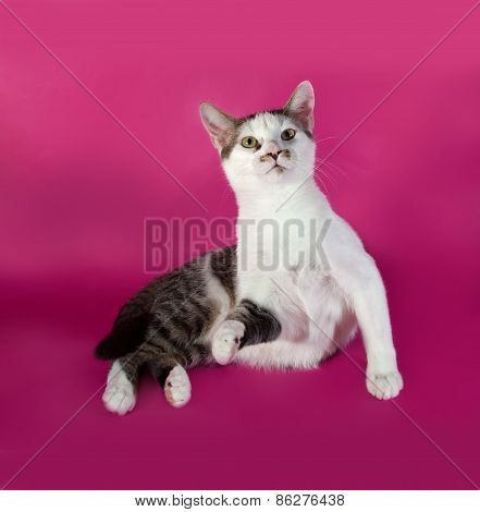 White Kitten Agressive Teenager With Black Spots  Sitting On Pink