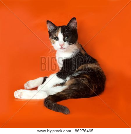 Tricolor Fluffy Kitten Sitting On Orange