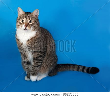 Tabby And White Cat With Sick Eyes Sitting On Blue