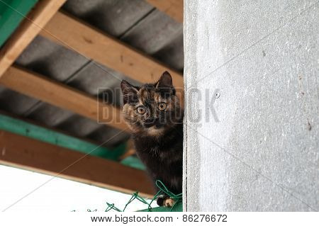 Black And Red Cat Looks Out Of Corner Of House