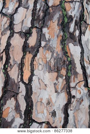 Unusual Colors On Tree Bark Form A Mottled Pattern