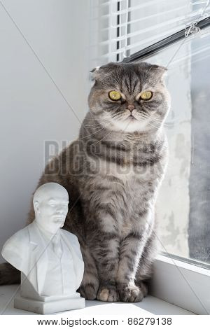 Cat and Lenin on the windowsill.