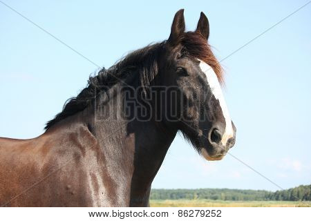 Portrait Of Beautiful Shire Horse On Sky Background