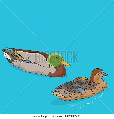 An image of a male and female mallard duck swimming in water.