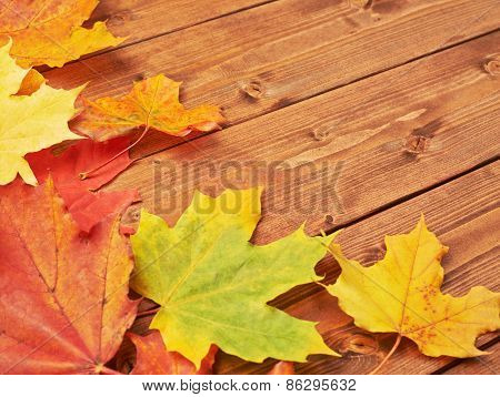 Maple leaves over the wooden boards
