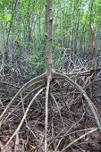 picture of sea-scape  - close up stucture of mangrove tree root on mud flat sea coastal - JPG