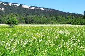picture of ural mountains  - Photo of a Alpine meadows in the Urals - JPG