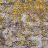 foto of lichenes  - Old concrete wall covered with lichen as a background composition - JPG