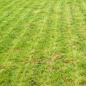 stock photo of manicured lawn  - Freshly manicured grass lawn as a nature background composition - JPG