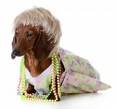 foto of dog clothes  - female dog  - JPG