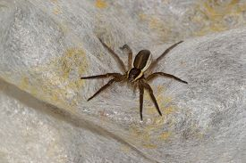 stock photo of terrestrial animal  - spider pets animals arachnid isolated animal brown - JPG