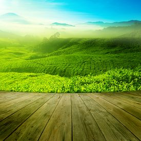 stock photo of morning sunrise  - Wood platform landscape view of tea plantation with blue sky in morning - JPG