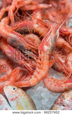 Red King Shrimps