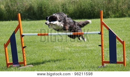 Dog Leaping.