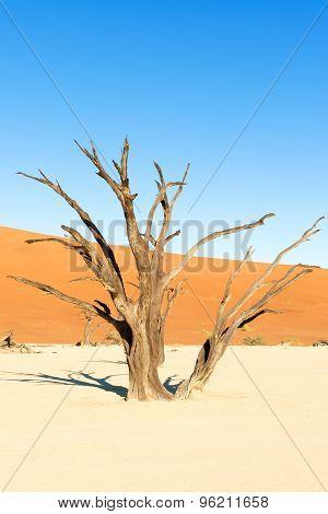 Dead Vlei Near Sesriem In Namibia