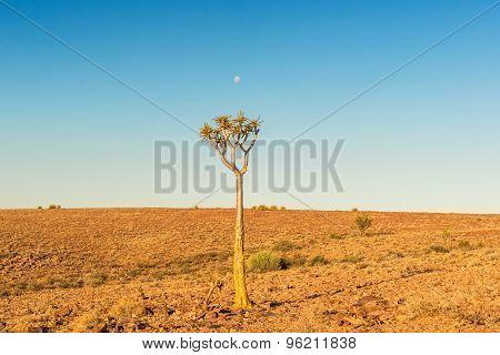 Tree In The Namib Desert Landscape