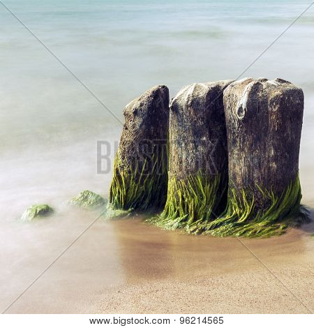 Old Mossy Groines In The Sea