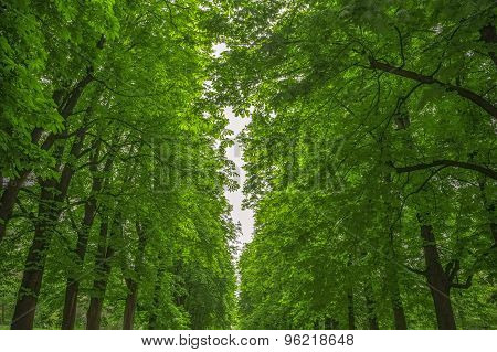 Leafy green trees