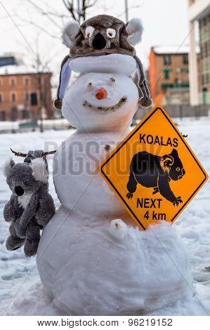 Snowman Koala