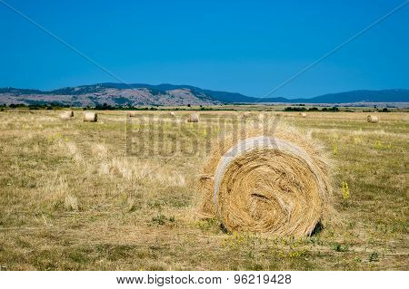 Haystacks on the field in summer.