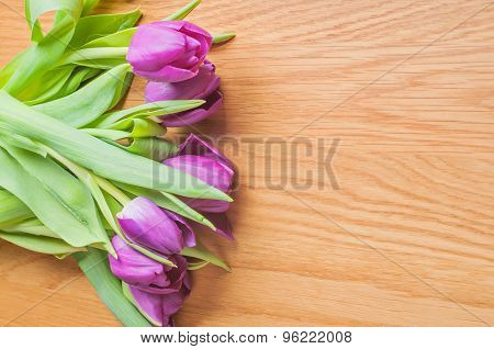Row of multicolored tulips for border or frame