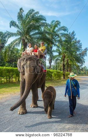 PHUKET, THAILAND - FEBRUARY 10: Unidentified family on an elephant ride tour with small baby elephant on February 10, 2015 in Phuket, Thailand.