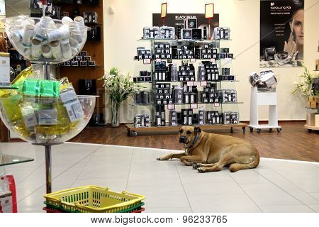 Dog  In The Cosmetics Store