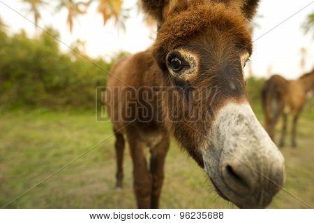 Donkey Baby Face