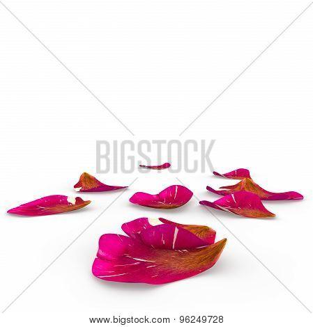 Rose Petals Speckled Lie On The Floor